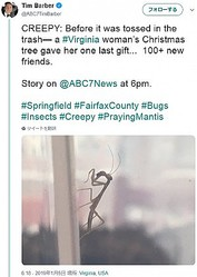 クリスマスが終わって誕生したカマキリ(画像は『Tim Barber 2019年1月4日付Twitter「CREEPY: Before it was tossed in the trash― a #Virginia woman's Christmas tree gave her one last gift...」』のスクリーンショット)