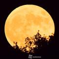 2017年で最も大きい満月「スーパームーン」観測日時は今夜の0時47分