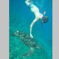 ウミガメに触るドイツ人少年=海巡署提供
