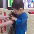背比べをしようと並ぶ子どもと猫 予想以上に伸びる猫に驚く