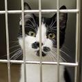「ペット需要」残った動物たち