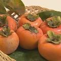 「柿渋」がコロナウイルスを無害化させる?奈良県立医科大学が発表