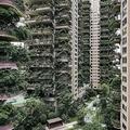 中国四川省成都で、植物に覆われた集合住宅のベランダ(2020年8月3日撮影)。(c)STR / AFP