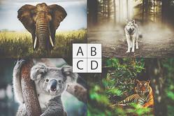 【心理テスト】人間の言葉を話せる動物は? 答えでわかるあなたが求める真実の友達
