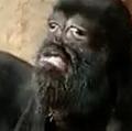インドで誕生した「人面ヤギ」神様の化身として崇拝対象に