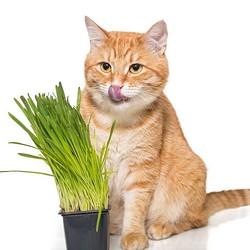 獣医師に聞いた!猫ちゃんの変な好物。なんでこんなものを食べるの!?