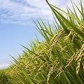 農林水産省によると、2019年の日本の食料自給率は38%だった。数字だけを見るとかなり低い数字だが、日本で深刻な飢餓が発生するということはない。これはなぜなのだろうか。(イメージ写真提供:123RF)