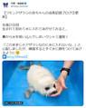 泳げないアザラシが慣れない水にくしゃみ連発 「天ぷらっぽい」