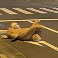 落ちていたクマ(画像はRYO_01@RYO_ZeroOneさん提供)