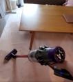 初めて掃除機を見る子猫 恐る恐る様子を確認する姿がかわいい
