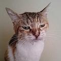 薬を飲まされて不機嫌そうな「ジト目」をする猫が話題 3時間で機嫌直る