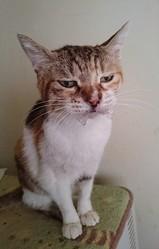 お薬を飲まされて超不機嫌…!ジト目をする猫さんの感情がわかりやすすぎる