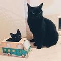 ツイッターでバズった「新人ドライバー教育」の写真。箱に入っているのが預かり猫のあんこちゃん(画像提供:キョウさん@kyoxxxxx_)