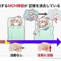 研究の概要イラスト。(illustration by panoji.com)