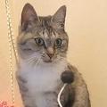 あまりにも虚無 清々しいほどおもちゃを無視する猫が話題