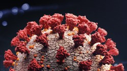 新型ウイルス再感染の米男性、1回目より「病状悪化」=米研究チーム