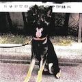 兵庫の山中で逃げ出した警察犬を発見 確保の際は怯えた様子も