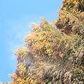 日や時間帯によって変化 スギ花粉が飛散しやすい気象条件とは