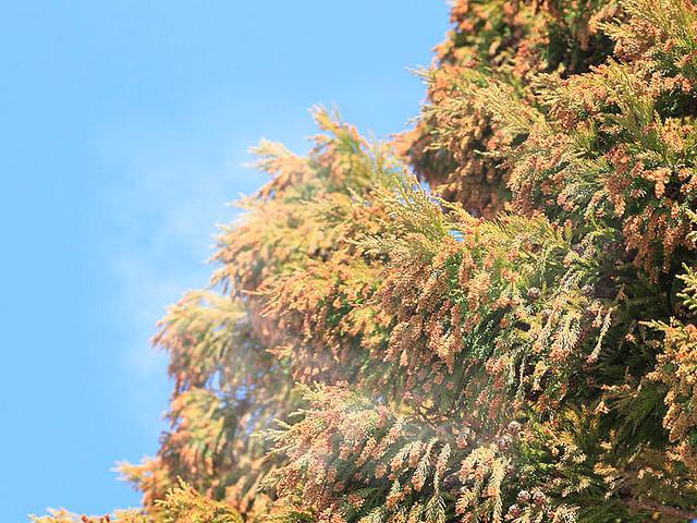 花粉が飛散しやすい気象条件とは