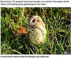 フクロウにそっくりのキノコ(画像は『The Sun 2020年11月20日付「HOOT HAVE THOUGHT IT Mum who tried to rescue baby owl stunned after it turned out to be… a mushroom」(Credit: SWNS:South West News Service)』のスクリーンショット)