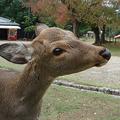 Meghan feeding a deer