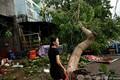 台風が通過したベトナム中部クアンガイ省で、がれきを撤去する女性(2020年10月28日撮影)。(c)MANAN VATSYAYANA / AFP