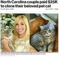 生前の愛猫シナバン(左)とシナバンそっくりのクローン猫(画像は『New York Post 2019年6月27日付「North Carolina couple paid $25K to clone their beloved pet cat」(Bryan Bullerdick/SWNS.COM)』のスクリーンショット)