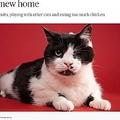 埋葬されるも奇跡的に土から這い出した猫(画像は『TODAY 2021年4月27日付「'Zombie Cat' who survived being buried alive relishes life in new home」(Adam Goldberg / AGoldPhoto Pet Photography)』のスクリーンショット)