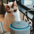 喋るアレクサを前に声の主を探す猫 Twitterで話題に