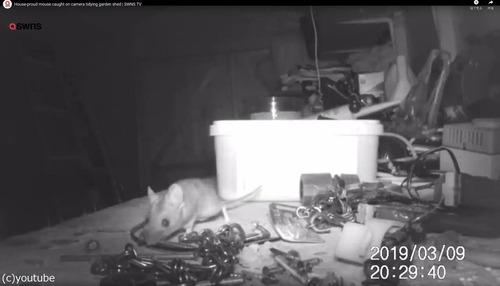 72歳のおじいちゃん「ネズミが夜中に工具を片づけていたけど、誰も信じてくれないので録画した」→ホントだった