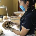 メキシコで、マヤ時代の頭蓋骨を研究するアリソン・ウィルソン氏。豪セントラルクイーンズランド大学提供(2019年9月13日提供、撮影日不明)。(c)AFP=時事/AFPBB News