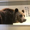 2mはヒグマ1頭分?距離を実感する迫力ある札幌の広告に好反響集まる