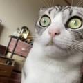 「犯人は黙秘を続けています」口元に物的証拠を残した猫が話題