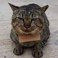 失踪の猫「借金」抱え帰宅 タイ