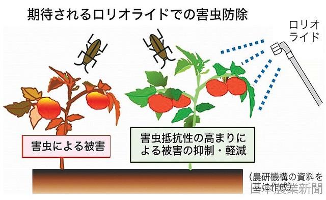 [画像] タバコ天然成分ロリオライド トマトの抵抗性を高め 複数害虫防ぐ 農研機構
