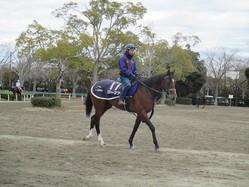 【ホープフルS】ワーケア 手塚師「走る馬らしい良い雰囲気」