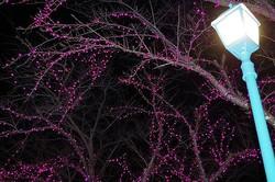 北の防人大湊安渡館、冬の夜を彩るイルミネーション/写真は主催者提供