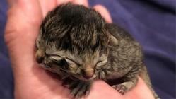 顔が2つある子猫が誕生 米オレゴン州