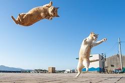 画像提供:久方 広之「のら猫拳」(@sakata_77)さん