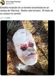 人間の顔のような子牛に人々驚く(画像は『Victor Hugo Prandina 2019年9月6日付Twitter「Extraña mutación de un ternero encontrado en un campo de Villa Ana.」』のスクリーンショット)