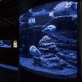 館内では駿河湾に棲む深海生物や世界中の変わった生き物が展示されている