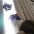 猫神様が降臨 おもしろ失敗写真