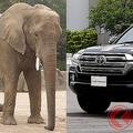 トヨタのランドクルーザー サバンナの動物たちと凄さを比較