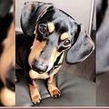 手違いで安楽死された犬(画像は『New York Post 2019年12月11日付「Utah family devastated after vet euthanizes wrong dog」(Facebook)』のスクリーンショット)