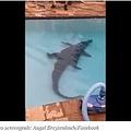 プールの底に見知らぬワニが(画像は『Eyewitness News 2021年2月3日付「WATCH: CROCODILE REMOVED FROM NW FAMILY'S SWIMMING POOL」(Image: Video screengrab: Angel Breytenbach/Facebook)』のスクリーンショット)
