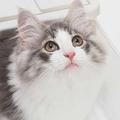 マイペースで気まぐれに見える猫は人の気持ちがわかるの?キャットシッターに聞いた