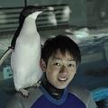 好奇心が旺盛な名古屋港水族館のペンギン 「肩のり」の技を習得