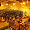 秘密の地下室で栽培「大麻工場」を摘発 暴力団の資金源に