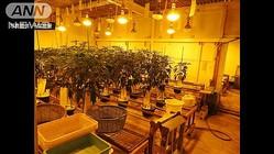 """""""大麻工場""""摘発 秘密の地下室で栽培、袋詰めまで"""