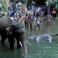 妊娠中の野生ゾウの死骸(中央)。インド南部ケララ州の川で(2020年5月27日撮影)。(c)STR / AFP